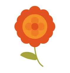 Aster flower natural image vector