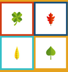 Flat icon foliage set of hickory frond maple and vector