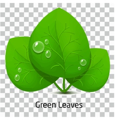 Green leave and drop rain vector