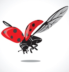 Lady bug graphic a vector