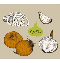 Onion Set f vector image