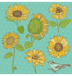 Flower Set Detailed Hand Drawn Sunflowers vector image vector image