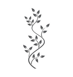 Natural ornamentation with ivy on white background vector