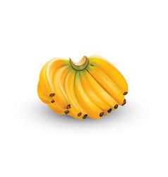 Banana in format vector