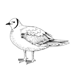 Hand drawn pink gull vector