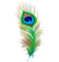 Peacock feather Beautiful bird feather vector