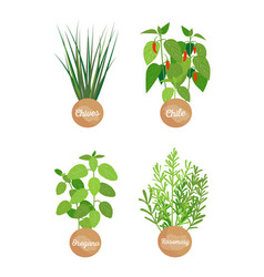 Oregano and rosemary set chives chilli set vector