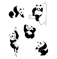 Pandas in different positions vector
