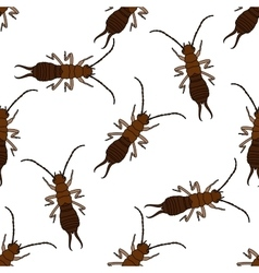 Seamless pattern with Earwig Forficula vector image