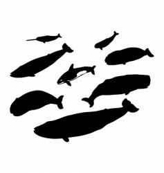 several whales vector image