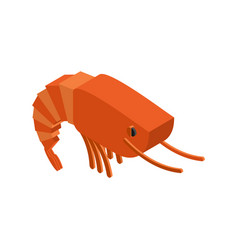 Shrimp isolated crustaceans on white background vector