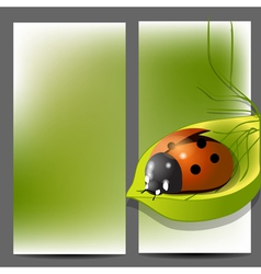 Template for brochure with ladybug vector