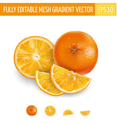 Whole orange and sliced on a white background vector