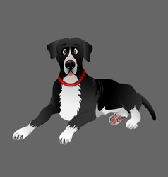 dog Great Dane black laying vector image