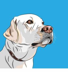 white dog breed labrador retriever vector image