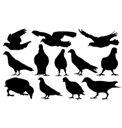 pigeons vector image vector image