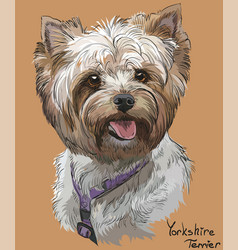 Coloful hand drawing portrait of yorkshire vector