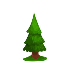 green coniferous tree vector image vector image