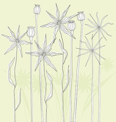 Meadow weeds and poppies silhouettes vector image