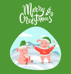 merry christmas lettering wishes and piglets gifts vector image