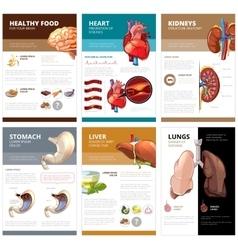 Internal human organs chart diagram infographic vector image