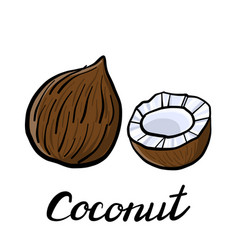 Drawing coconut vector