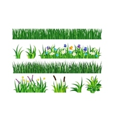 Grass vector image