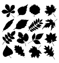 Set of black silhouettes of leaves on white vector