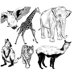 Set of hand drawn wild animal vector