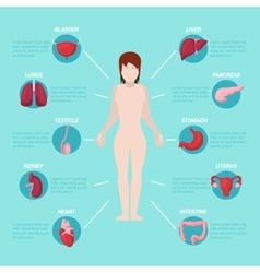 Human Body Anatomy Medical Scheme vector image