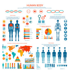 concept of human body colored infographic cartoon vector image