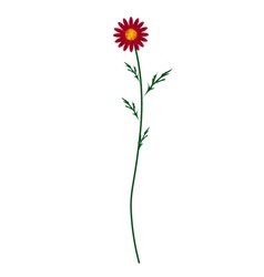 Red Daisy Blossom on A White Background vector image vector image