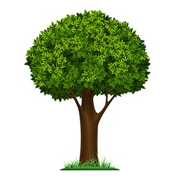 tree isolated on white background vector image