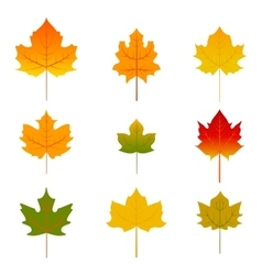 Set of five red and yellow maple leaves isolated vector image vector image