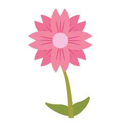 Amaryllis flower natural image vector
