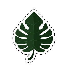 Cartoon monstera tropicalplant icon vector