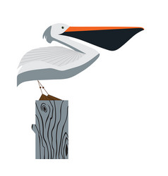 Pelican on white background vector
