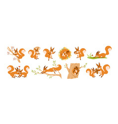 set cute squirrel character flat vector image