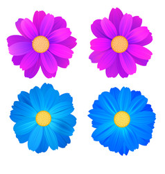 Set isolated buds flowers blue and purple vector