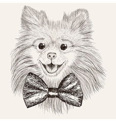 Sketch Spitz with bow tie Hand drawn dog vector image
