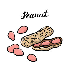 drawing peanuts vector image