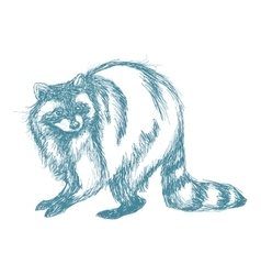 raccoon sketch blue vintage vector image