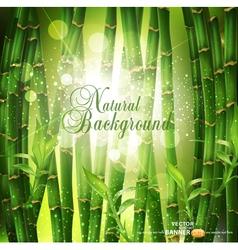 oriental bamboo grove vector image