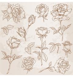 Flower set detailed hand drawn roses vector