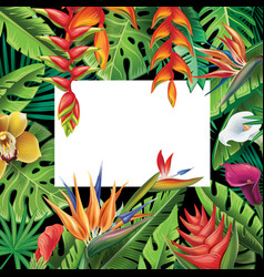 frame from tropical plants and flowers vector image vector image