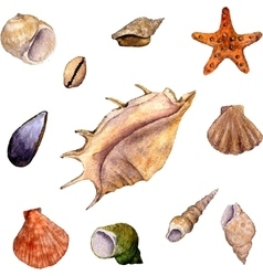 set of watercolor drawing shells vector image vector image