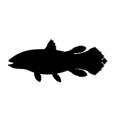 Latimeria fish silhouette living fossil vector
