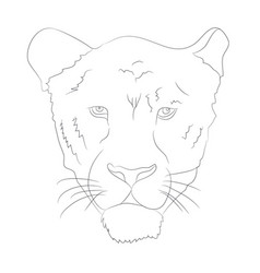 portrait of a cougar drawing lines vector image