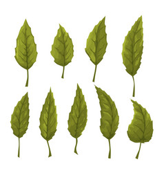 Set of green leaves on a white background vector