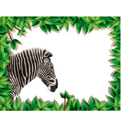 Zebra in nature frame vector